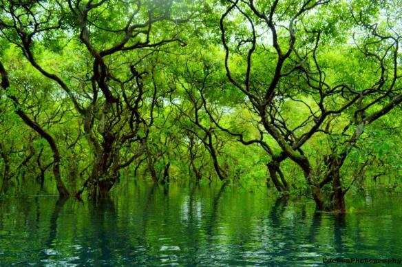 Ratargul_Swamp_Forest_Sylhet_Bangladesh by DM Rehem SMALLER
